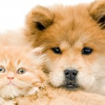All Natural Pet Care