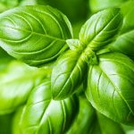 Bursting With Basil? Here's How to Use It