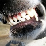 Dog Bites: A SHTF Medical Emergency You Haven't Considered