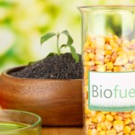 DIY: Make Your Own Biodiesel