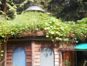 Living Inside An Organic Shelter
