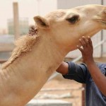 MERS may have mutated to airborne agent