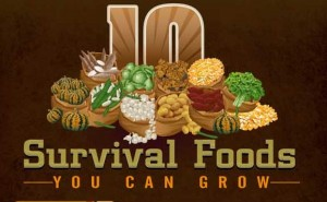 Survival Food – 10 You Should Be Growing Yourself