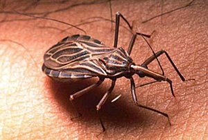 Chagas Disease – A Slow Burning Emergency