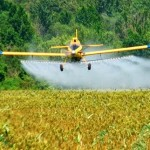 Pesticide DDT linked to slow metabolism, obesity and diabetes