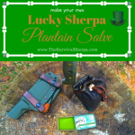 How to Make Lucky Sherpa Plantain Salve