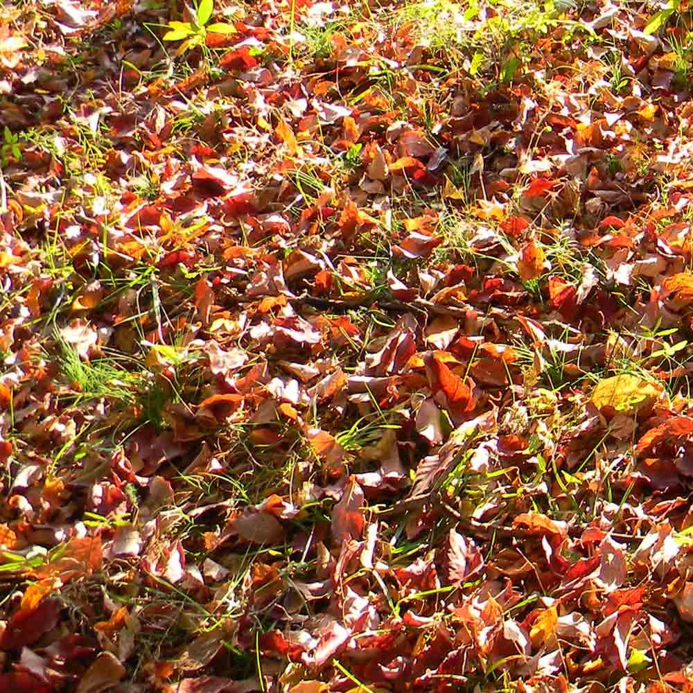 Gardening tasks for fall ready nutrition - Fall gardening tasks ...