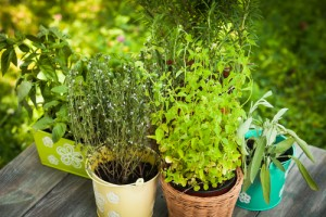 Planting and Growing Herbs
