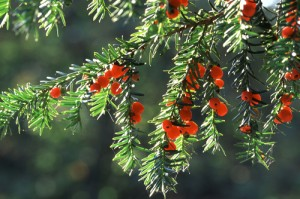 The Most Poisonous Plants and How to Recognize Them