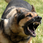 When Dogs Attack: 11 Steps That Could Keep You Alive