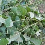 Prepare Your Garden for Winter with Cheap Green Manure
