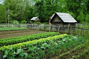 The Case for Homesteading