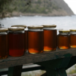 How to Choose the Right Honey for Your First Aid Kit