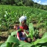 US Government, Monsanto and Gates Foundation Push GMOs on Unwilling Africa
