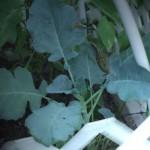 Secrets of a Successful Organic Garden
