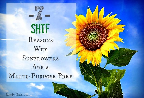 sunflowershtf