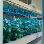 New Indoor Farming Device Can Grow Food With 95% Less Water