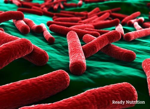 e. coli1