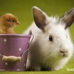 Wasteful Society: 80% of Easter Pets End Up Here