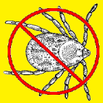 A Quick and Dirty Guide to Tick Removal and Prevention