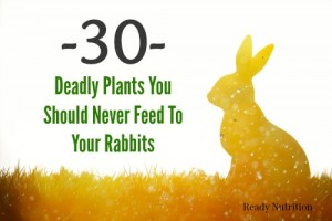 30 Deadly Plants You Should Never Feed To Your Rabbits
