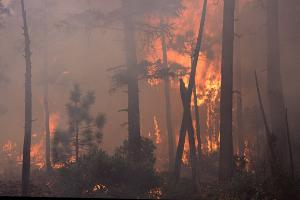 forest fire wikimedia
