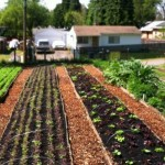 8 Reasons to Become a Yardfarmer