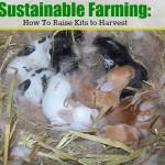 Sustainable Farming: Raising Kits to Harvest
