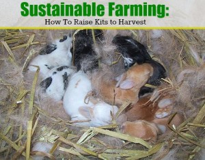 Sustainable Farming: Raising Kits to Harvest