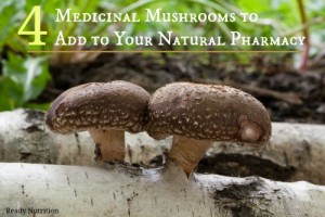Four Medicinal Mushrooms to Add to Your Natural Pharmacy