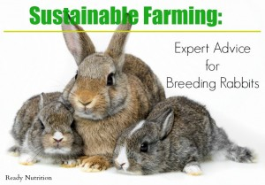 Sustainable Farming: Expert Advice for Breeding Rabbits