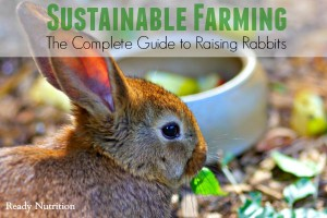 Sustainable Farming: The Complete Guide to Raising Rabbits