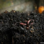 DIY Vermicomposting: The Most Efficient Way of Using Organic Material