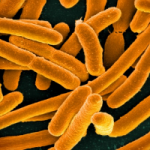 "Expert Warns It's ""Almost Too Late"" to Stop Superbugs"