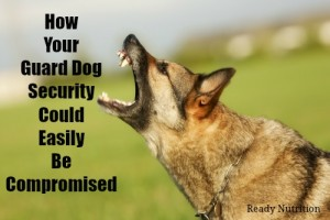 How Your Guard Dog Security Could Easily Be Compromised