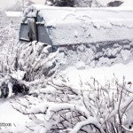 Winter Homesteading: A Must-Read Guide to Staying Ahead