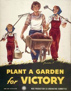 victory garden 2 - The Victory Garden