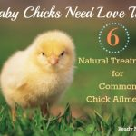 Baby Chicks Need Love Too: 6 Natural Treatments for Common Chick Ailments
