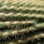 Treating Cactus Injuries Is Harder Than You Think. Here's Why.