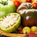 Grow the Heartiest Tomatoes with These Organic Tips