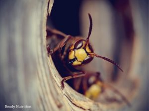 Bees, Wasps, and Hornets: They're Back!