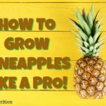 How To Grow Pineapples Like a Pro!