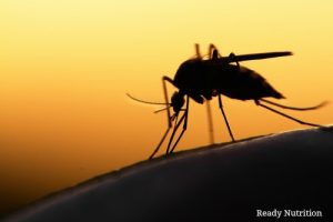 FDA Approves Mutant Mosquitos for the Suppression of the Zika Virus
