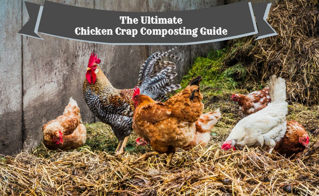 The Ultimate Chicken Crap Composting Guide