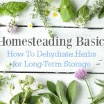 Homesteading Basics: How To Dehydrate Herbs for Long-Term Storage