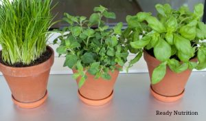 How To Prepare an Herb Garden in Winter