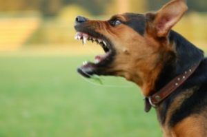 The Signs You Need to Know When Your Dog Is About to Bite!