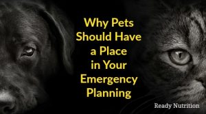 Why Pets Should Have a Place in Your Emergency Planning