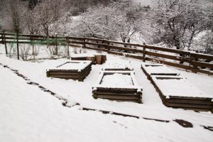 4 Big Ways Snow Can Benefit the Garden