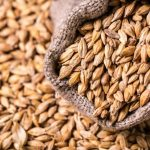 Growing and Using Barley at Home